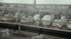 Animal farm for rabbits Stock Footage