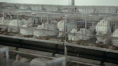Livestock business. rabbit farm Stock Footage