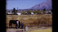 1968: two small boys petting a large black horse in an open field CLARKSDALE Stock Footage
