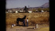 1968: two small boys petting a large black horse in an open field CLARKSDALE, Stock Footage