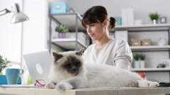 Cute cat relaxing on a desk Stock Footage
