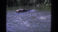 1962: hippo and peacock swimming SAN PEDRO, CALIFORNIA Stock Footage