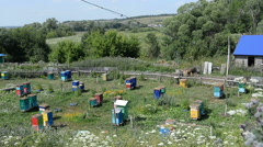 Country apiary. Summer, hives, forest, glade. Stock Footage