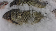 Frozen fish on the counter decomposed with ice in supermarket Stock Footage