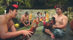 Two balinese man playing with roosters, women in background Stock Footage
