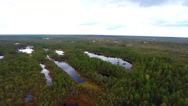 Aerial footage. Flight Over Swamp. Nature landscape. Stock Footage