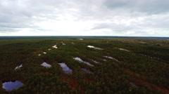 Aerial footage. Flight Over Swamp. Nature landscape. Stock Footage