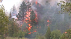 A wild burning forest fire consumes timbers in Colorado. Stock Footage