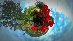 Little Tiny Planet 360 Degree Flower Beds White Red Flowers Are Blooming Stock Footage