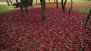 Reddish park with fallen leaves in autumn Stock Footage
