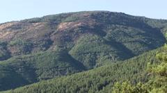 Pine tree forest in Serra da Estrela Portugal Stock Footage