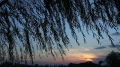 Silhouettes of weeping willow branches and leaves blowing in the wind Stock Footage