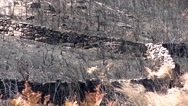 Burnt pine tree forest deforestation fire natural disaster Stock Footage