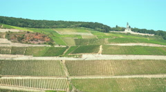Vineyards on the River Rhine Stock Footage
