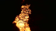Tilt down close up of fire burning trees in the night. Silhouette. Stock Footage