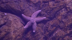 A starfish on the rock 2 Stock Footage
