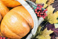 Pumpkins for Halloween and autumn gifts of nature Stock Photos
