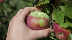 4K Picking An Apple From Tree Closeup Shot Stock Footage
