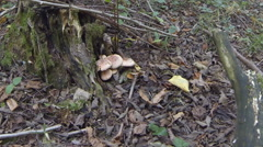 Stump in the forest with mushrooms Stock Footage