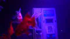 Goldfish are swimming in call box Stock Footage