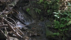 Little mountain river in the forest. UHD footage. Stock Footage