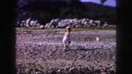 1958: child playing in a rocky beach AMES, IOWA Stock Footage