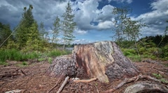 Timelapse with stump Stock Footage