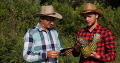 Two Peasant Men Speaking About Bio Plantation Teamwork and Examining Pineapple Stock Footage