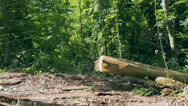 Deforestation, transportation trees from forest Stock Footage
