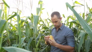Farmer checking corn in the field Stock Footage