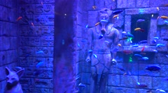 Panning decorated aquarium with fish Stock Footage