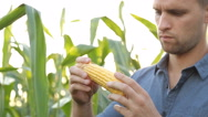 Farmer inspecting his corn in the field, looking at camera, close up Stock Footage
