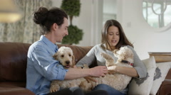 4K Couple relaxing at home with 2 cute young puppies Stock Footage