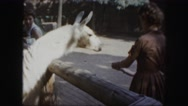 1958: white horse is fed by a mother and her child in the zoo AMES, IOWA Stock Footage