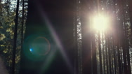 Bright sun flare through dense forest trees Stock Footage