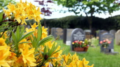 Daylillies growing in a churchyard Stock Footage