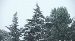 Close up of the top of trees during a heavy snowfall. Stock Footage