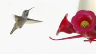 Humming Bird In Super Slow Motion 4k Stock Footage