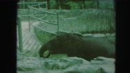 1958: an elephant is seen and a person is seen viewing it AMES, IOWA Stock Footage