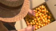 Woman's hands touch fruits. Stock Footage