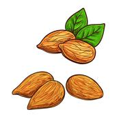 Almond isolated vector icon Stock Illustration