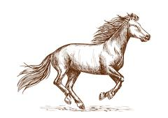 White horse running gallop sketch portrait Stock Illustration