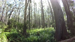 Eucalyptus Forest Woodland in Australia Fisheye Lens Stock Footage