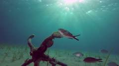Fishes pass by ship's old anchor and chain line under sea in Greece Stock Footage