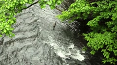 View of a small stream rapids in forest.  Stock Footage