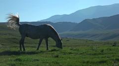 Horse At Sunset. Slow moteon Stock Footage