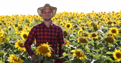 Optimistic Farmer Man Looking at Camera and Showing OK Sign on Sunflower Field Stock Footage
