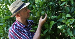 Orange Tree Cultivator Checking Fruit Quality and Examining Plantation Harvest Stock Footage