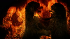 Bears Fight In Flames Abstract Stock Footage