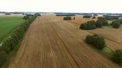 Wheat field with height Stock Footage